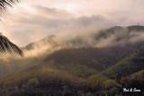 early morning fog in the hillsides