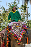 elephants too