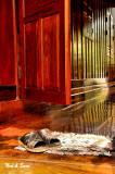 teak doors and  sparkling foors