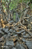 rock and root jumble - Beng Malea site - Angkor