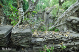 vines cover everything - Beng Malea site - Angkor