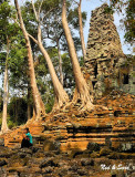 rooted in the  foundation - Angkor Thom