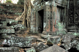 stones, lichen,  roots, carvings and color