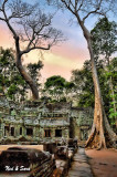 early morning at incredible Ta Phrom