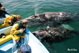 Ned & Sara and mother gray whale and her calf