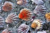 clamshell  walkway
