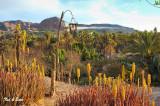 palm grove at  Mulege