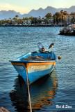 Loreto harbor heron