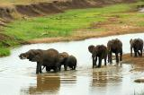 elephant family crossing a stream