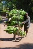 man carrying 600 pounds of bananas on a bicycle
