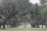 Ancient Oaks of Jefferson College