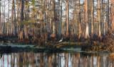 Louisiana Bayou Scene