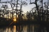 Sunrise in the Cypress Marsh