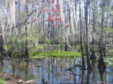A Swamp in February
