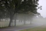 Louisiana River Road in Fog
