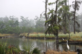 Early Morning Mist in the Swamp