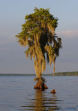 Lake des Allemands