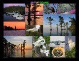Montage of my Photos