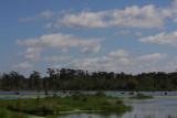 Mid-October in the Wetlands