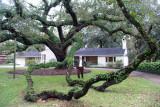 Urban Landscape -Now That is Some Oak Tree
