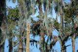 Eagles' Nest Still Intact