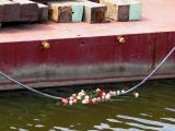 Flowers in Memory of Katrina Victims
