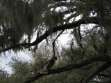 Nature's Playground - the Live Oak
