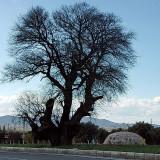 milas-bodrum karayolu