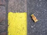 Things on the street II