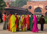 Colourful Visitors.jpg