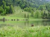 Alpine Valley Spring