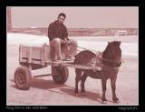 Pony Cart on Abu Saib Beach
