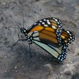 August 12th, 2006 - Butterfly 1075