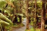 The Rainforest At The End of Thurston Lava Tube