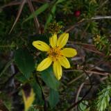 Ko'oko'olau Flower