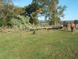 praying_tree_down