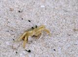 A Crabby