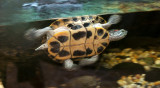 Barbados Wildlife Reserve: Sea Turtle