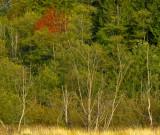 North Creek Autumn-0101-1.jpg
