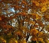 North Creek Autumn-0021-1.jpg