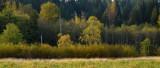 North Creek Autumn-0075-1.jpg