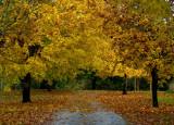 North Creek Autumn-0116-1.jpg