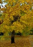 North Creek Autumn-0127-1.jpg