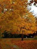North Creek Autumn-0129-1.jpg