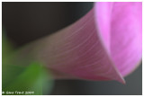 Colorful Abstract-8898.jpg