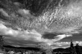 Northwest Skies