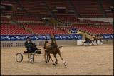 saddlebred show