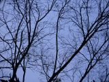 Woods in the blueby Tabrizi