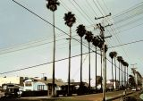 Palm Trees & Power Lines  by inframan
