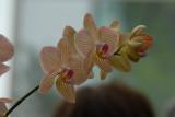Orquideas mayo